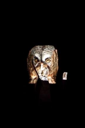 Meryl McMaster, Owl, 2010