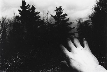 Larry Towell, Untitled [Hand and trees], 1974