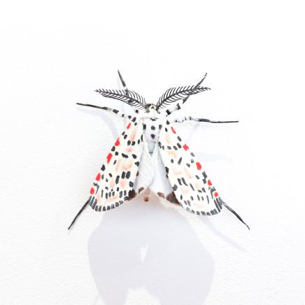 Elizabeth Thomson, Moth #37, 2020