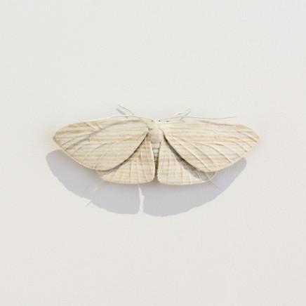 Elizabeth Thomson, Moth #15, 2020