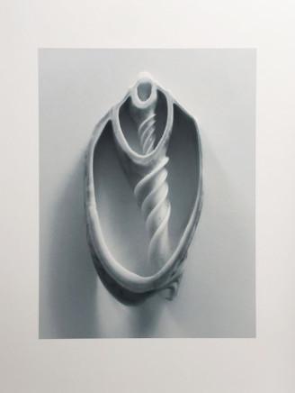 Peter Peryer, Shell Study, 2017