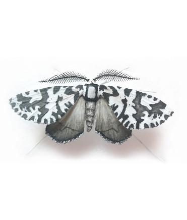 Elizabeth Thomson, Moth #13, 2017