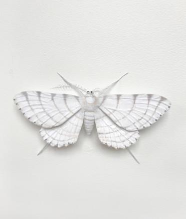 Elizabeth Thomson, Moth #10, 2017