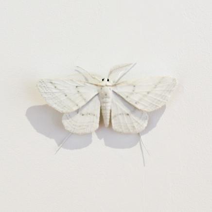 Elizabeth Thomson, Moth #14, 2020