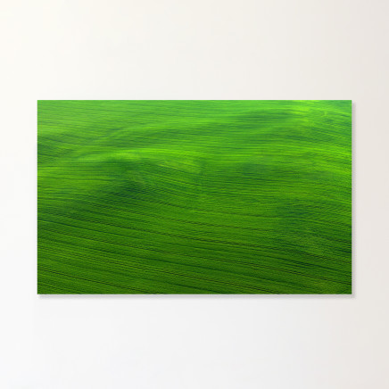 Elizabeth Thomson, Green Just Lies There Awhile Breathing, Long Slow Breaths, 2019