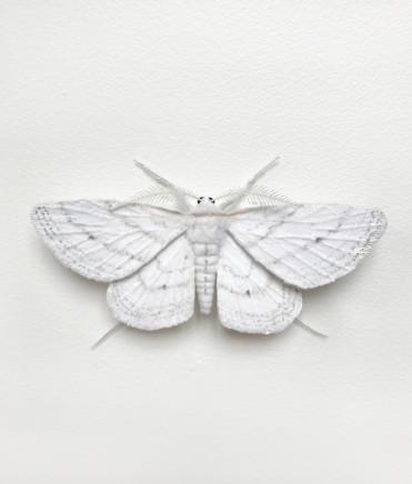 Elizabeth Thomson, Moth #11, 2017