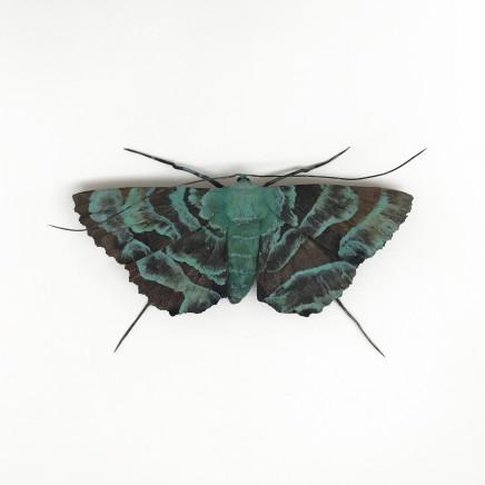 Elizabeth Thomson, Patina Moth 2, 2018