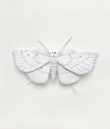 Elizabeth Thomson, Moth #7