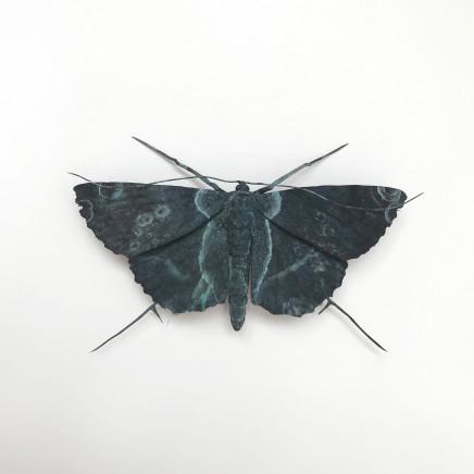 Elizabeth Thomson, Patina Moth 3, 2018