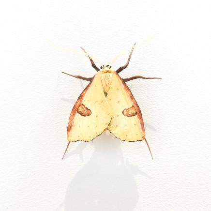 Elizabeth Thomson, Moth #30, 2020