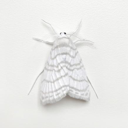 Elizabeth Thomson, Moth #9, 2017