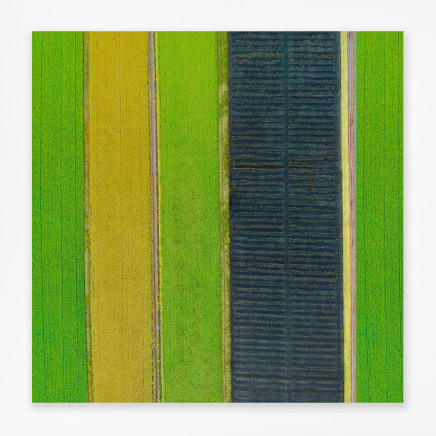 Elizabeth Thomson, Green intervals out on the plain, 2020