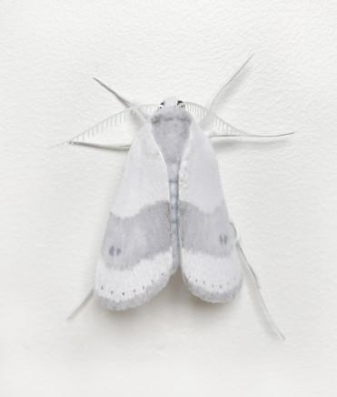 Elizabeth Thomson, Moth #4