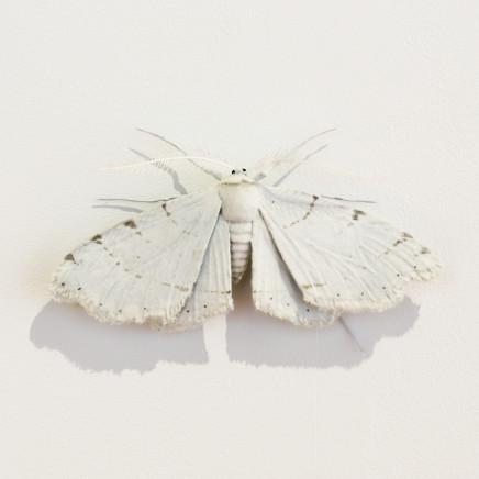 Elizabeth Thomson, Moth #22, 2020
