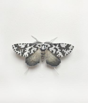 Elizabeth Thomson, Moth #12, 2017