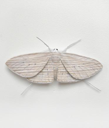 Elizabeth Thomson, Moth #6