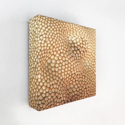 Elizabeth Thomson, Inner Raoul Studies IV, 2011