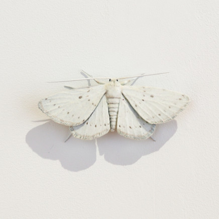 Elizabeth Thomson, Moth #17, 2020