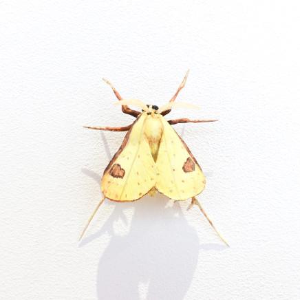 Elizabeth Thomson, Moth #35, 2020