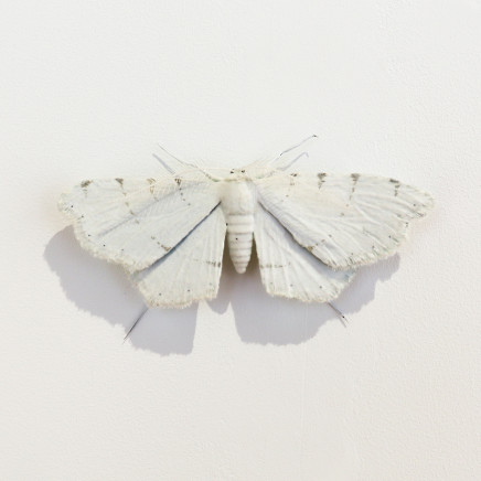 Elizabeth Thomson, Moth #18, 2020
