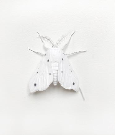 Elizabeth Thomson, Moth #2