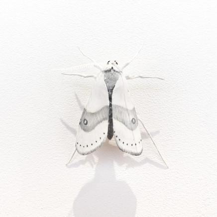 Elizabeth Thomson, Moth #33, 2020