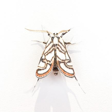Elizabeth Thomson, Moth #32, 2020
