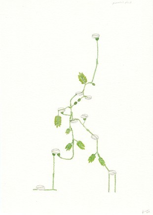 Zina Swanson, Panadol Plant, 2013
