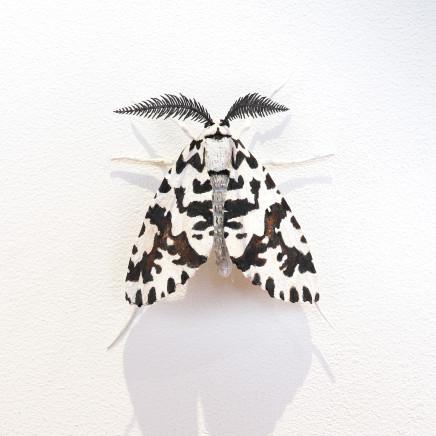 Elizabeth Thomson, Moth #27, 2020