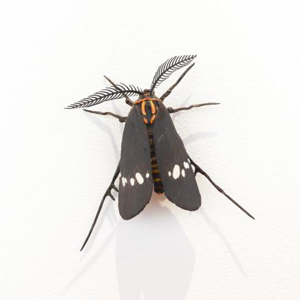Elizabeth Thomson, Moth #26, 2020