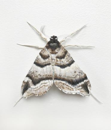 Elizabeth Thomson, Moth #1