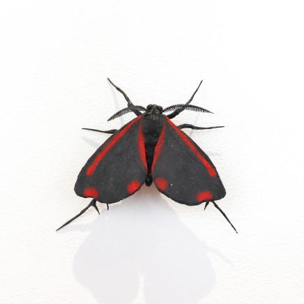 Elizabeth Thomson, Moth #40, 2020