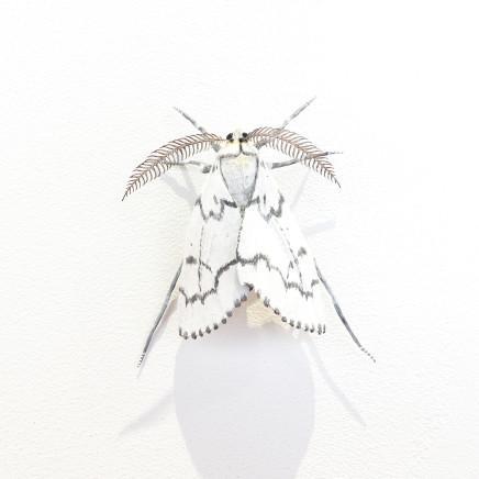 Elizabeth Thomson, Moth #31, 2020