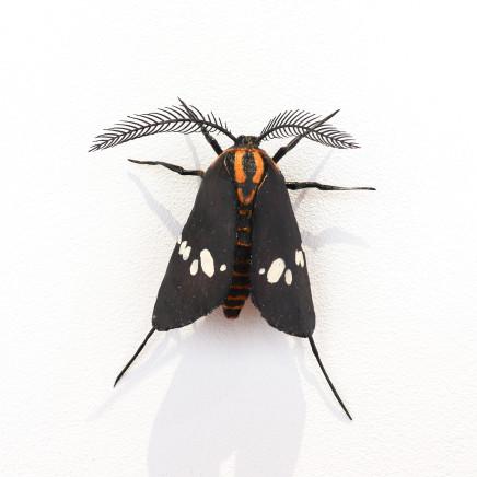 Elizabeth Thomson, Moth #36, 2020