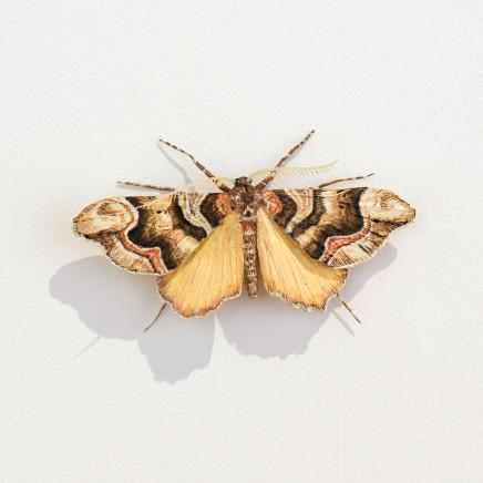 Elizabeth Thomson, Moth #23, 2020