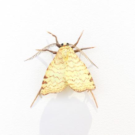 Elizabeth Thomson, Moth #34, 2020