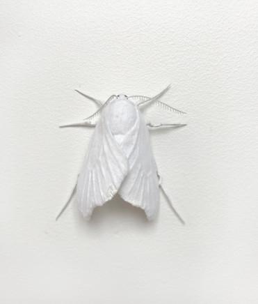 Elizabeth Thomson, Moth #8