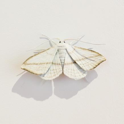 Elizabeth Thomson, Moth #20, 2020