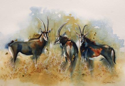 "Karen Laurence-Rowe SABLE ANTELOPES Watercolour 18"" X 27"""