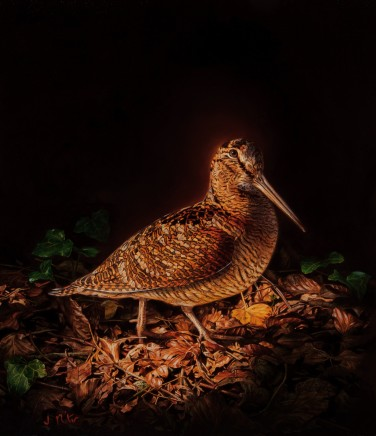 Jonathan Pointer WOODCOCK Oil on canvas laid on board