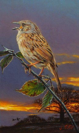 "Jonathan Pointer SINGING DUNNOCK Oil on canvas 8"" x 5"""