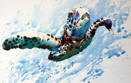 Jake Winkle  TRAVELING TURTLE  Watercolour  33 X 46cm