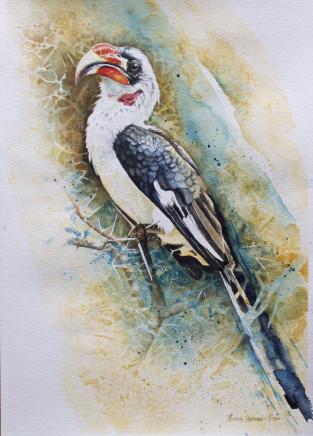 """Karen Laurence-Rowe VON DER DECKEN HORNBILL Watercolour 16"""" X 12"""""""