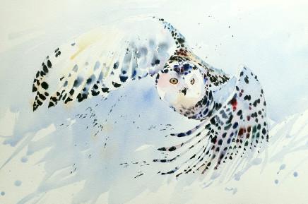 """Jake Winkle SWOOPING SNOWY OWL Watercolour 13"""" x 18"""""""