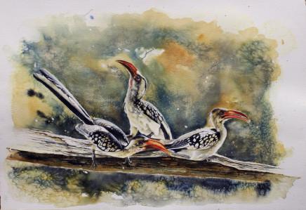 """Karen Laurence-Rowe RED BILLED HORNBILLS Watercolour 21"""" X 30"""""""