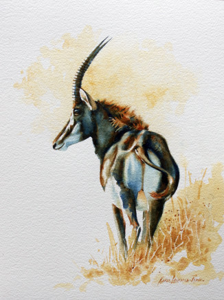 "Karen Laurence-Rowe SABLE ANTELOPE STUDY Watercolour 17"" X 12"""