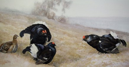 "Jonathan Sainsbury  BLACK GROUSE LECKING  Charcoal and watercolour  22"" x 40"""
