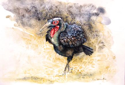 "Karen Laurence-Rowe MALE GROUND HORNBILL Watercolour 12"" X 17"""