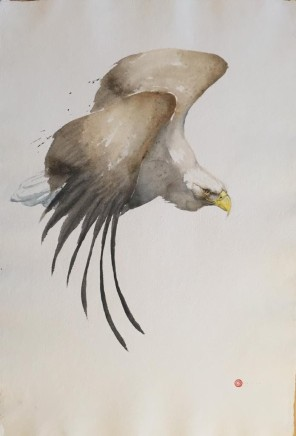 "Karl Martens  WHITE TAILED SEA EAGLE  Watercolour  40"" x 27"""