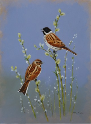 "Rodger Mcphail  REED BUNTINGS  Oil on paper  14"" x 10"""